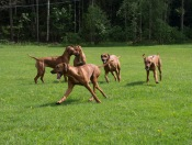 Vackra hundar!