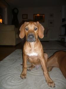 Vår Ibra, 4 månader-en vacker kille:)